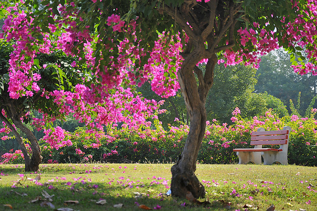 4 Beautiful Gardens To Visit In The City Of Chandigarh