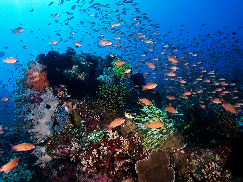 Underwater Beauty Of Indonesia And Malaysia