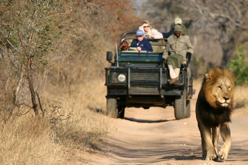 Some Famous Destination Guide For Wildlife Safari Tour In Africa